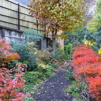 秋にはこんな彩りに