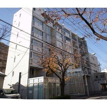 raffino tamagawa