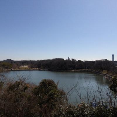 池の水面は今日も静かに揺れている