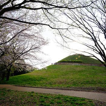 春には桜が咲いて気持ちよい♪
