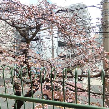 春を知る。