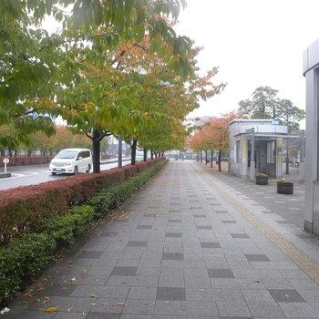 駅の近くは文化施設も多くいい雰囲気