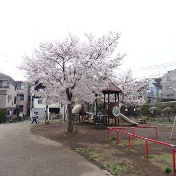 すぐの公園。来年のお花見はここで。