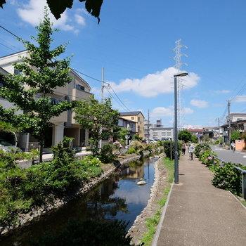 近くには小川が。散歩したい!!!