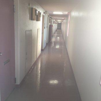 共有廊下は室内、きれいな印象ですね