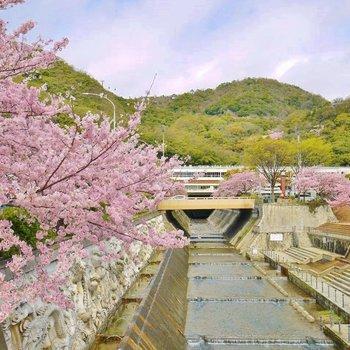 春になると桜が眺めれます