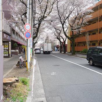 目の前の桜並木も気持ちいい!