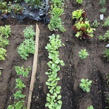 畑もあります!今はいちごをたくさん植えました◎
