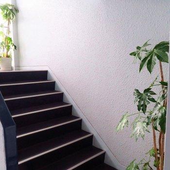 共用部も観葉植物が飾られています♪