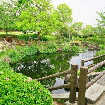 その奥には素敵な池と公園が!