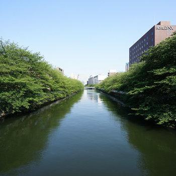 近くの川!桜が楽しみ◎