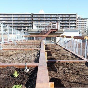 【Roof】屋・上・菜・園! ※写真は前回募集時のものです