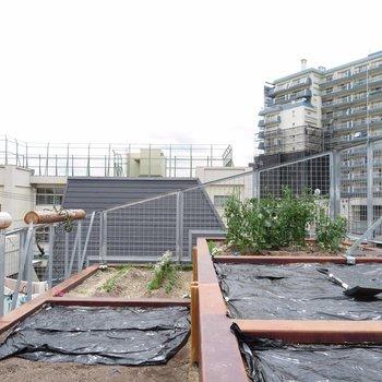 【Roof】都会でガーデンライフ※写真は前回募集時のものです