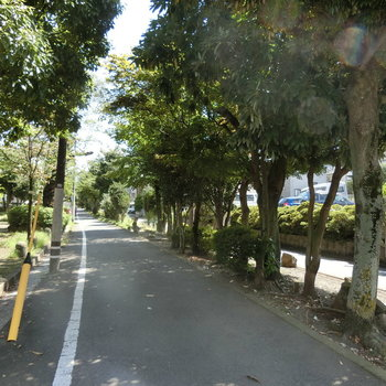 これが、目黒区緑の散歩道