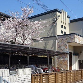 春には桜が見えます