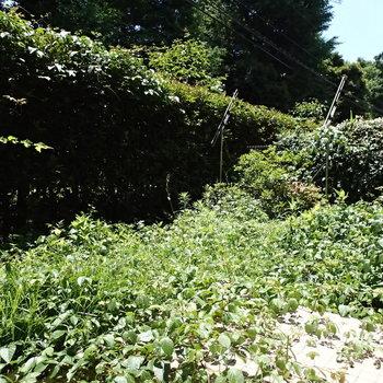 テラスは草が生い茂っております