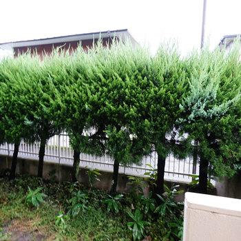 眺望はこちら、植栽があるので目隠しになっていますね