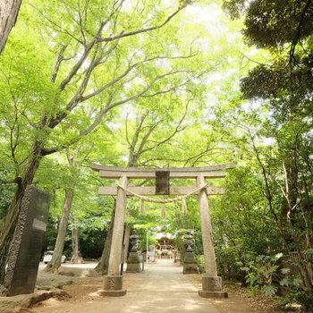 近くには小金井神社があります。神秘的です!