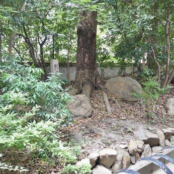 キラキラ木漏れ日が。