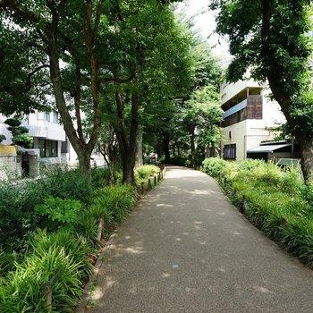 駅からはこの緑道を通っていきます!