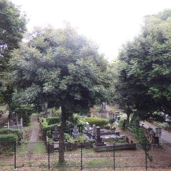 眺望。目の前は墓地…。