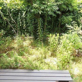 縁側からは、石灯篭のあるお庭を眺められます。