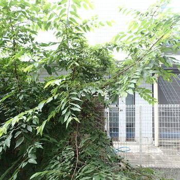 眺望は木と隣のアパート