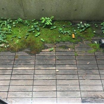 自然の苔が生えてます