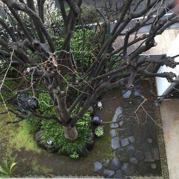 バルコニーから下を眺める※写真は別部屋からです