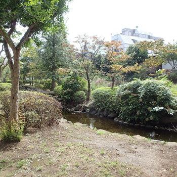 こちらが大横川親水公園!