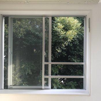 窓いっぱいの緑
