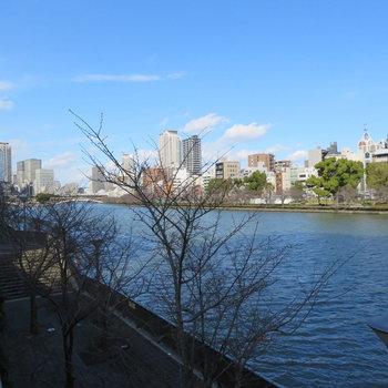 冬の大川は春を待っていました