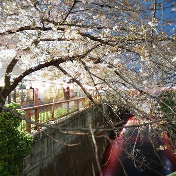 前に目黒川!春はお花見も。