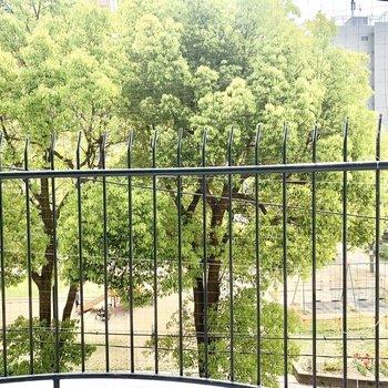 目の前は人参公園の木。