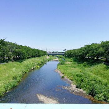 【おまけ】駅までの道のりにはせせらぐ川が。平和だ。