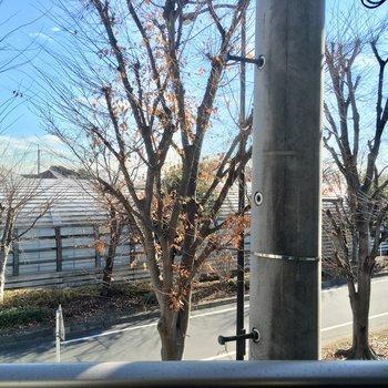 眺望はこんな感じで並木道が見えます※写真は2階の別部屋