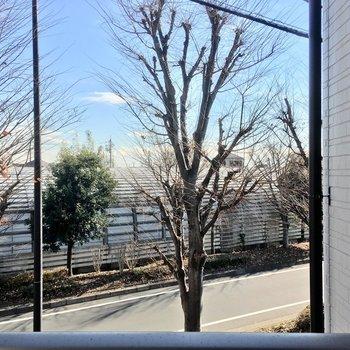 LDKからの眺望も寝室からと同じく並木道。※写真は2階の別部屋