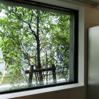 窓の外の木々を眺める。木漏れ日が楽しみ!!※写真は前回募集時のものです