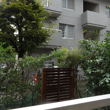 嬉しい専用庭付き!緑に癒やされますね。※写真は前回募集時のものです。実際はフェンスが設置されています。