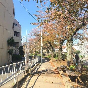 緑道を通って行きますよ。 ※写真は前回募集時のものです