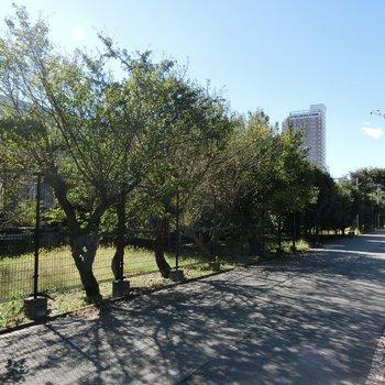 線路沿いには、こんな緑地が。紅葉もしてますね!!
