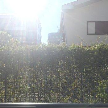 1階のため眺望はよくないですが緑が見えていいですね