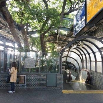 駅には立派な木