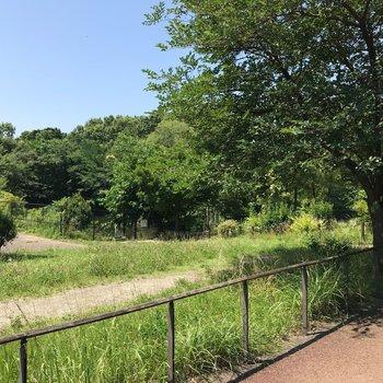近くにあった自然観察公園