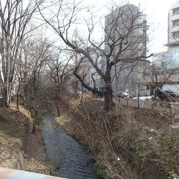 こちらが三鷹駅からの「風の散歩道」そのままジブリ美術館へ続きます。