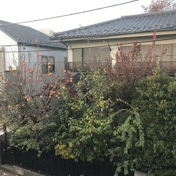 寝室の窓からは柿の木が見えます