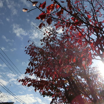 街では、木々が紅葉していました。