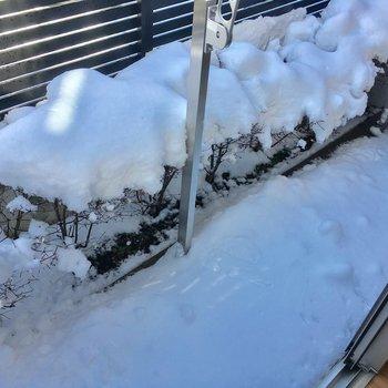 お庭へ出てみた!雪が積もってます