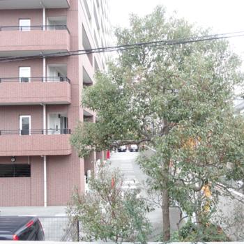眺望は目の前のマンションと木