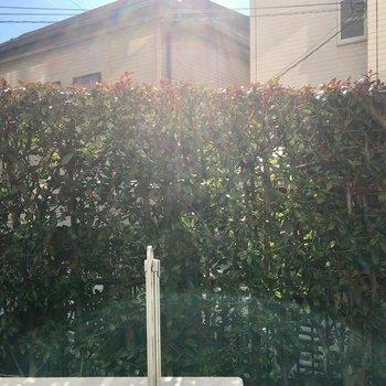 1階は垣根が緑のカーテンに。